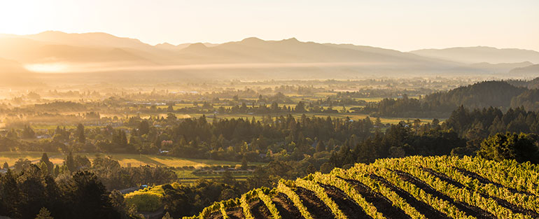 Napa Valley ligger strax norr om San Francisco